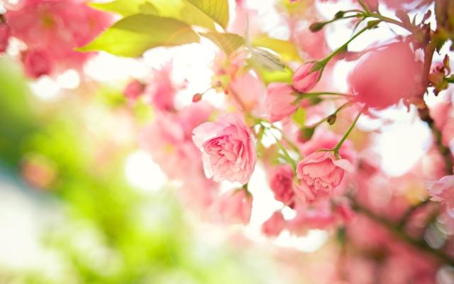 6926709-pink-flowers-bush